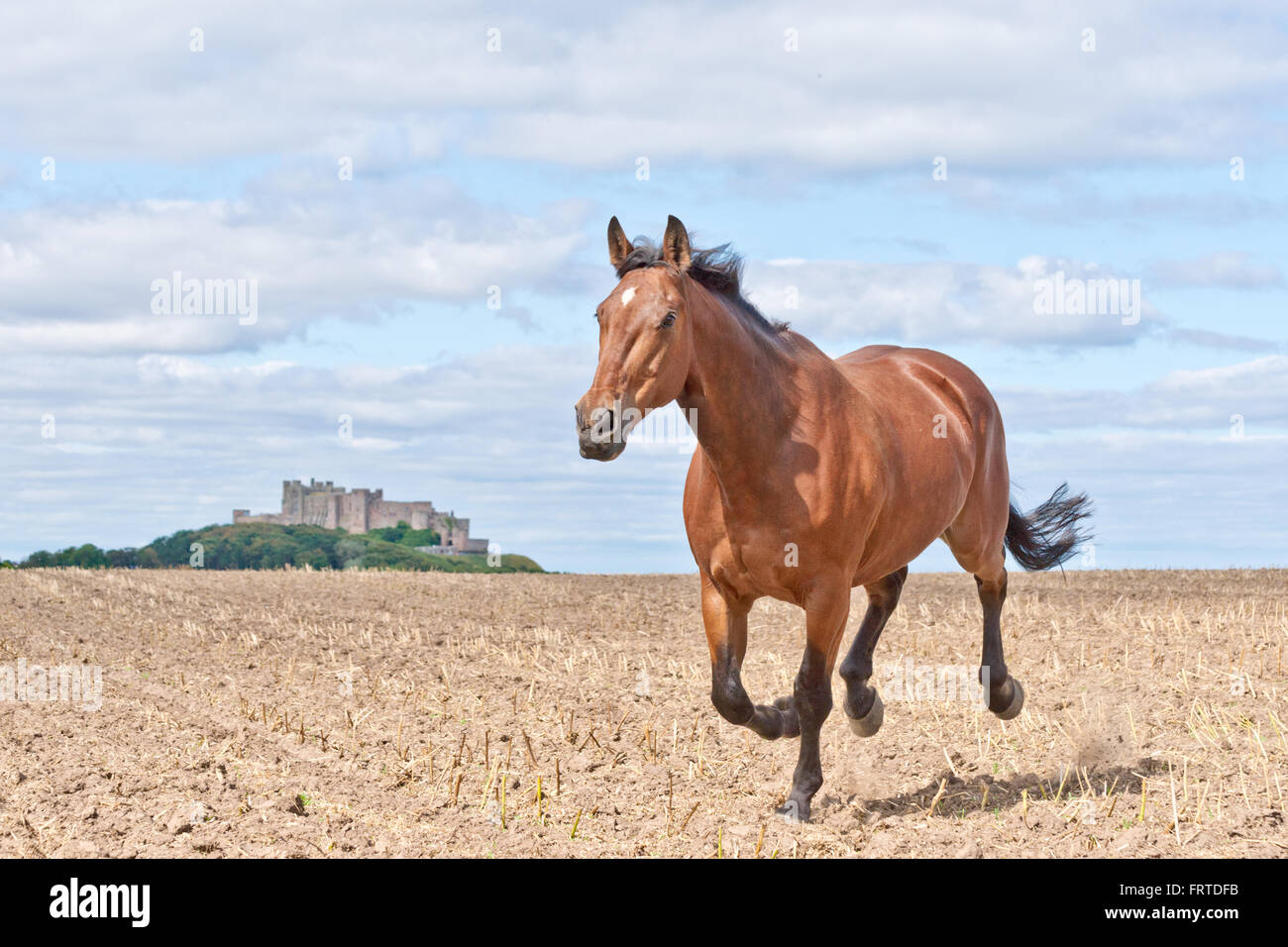 Galloping Horse Running From Castle Across A Ploughed Field Stock Photo Alamy