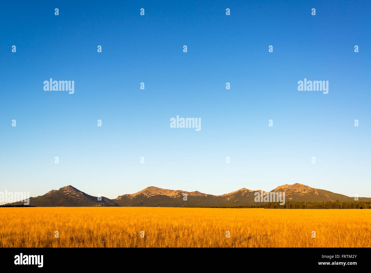 Bighorn Mountain Range in Wyoming bathed in the beautiful early morning light - Stock Image