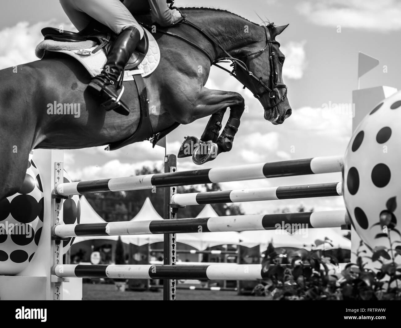 Jumping Horse Black And White Stock Photos Images Alamy