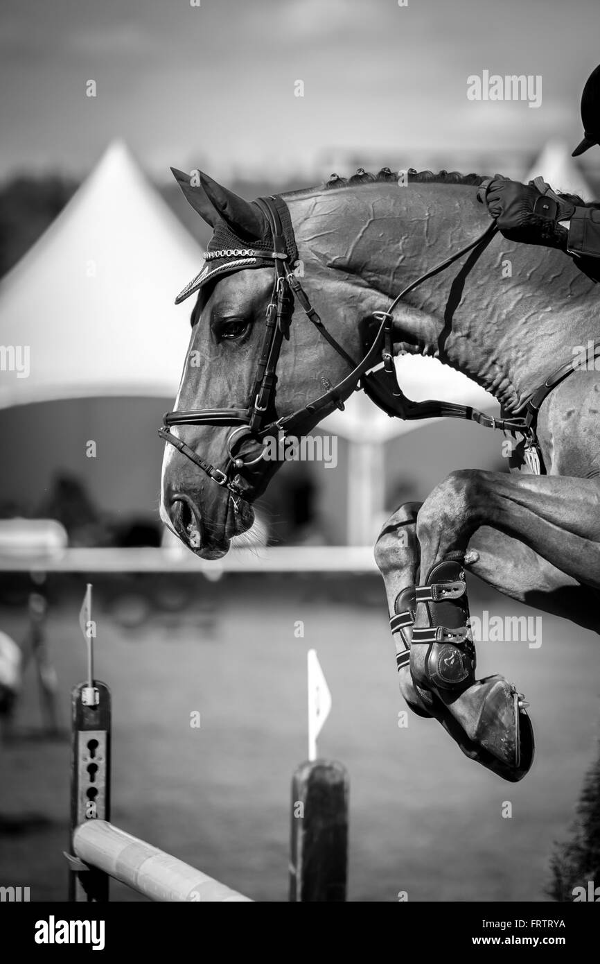 Show Jumping Horse Black And White Stock Photos Images Alamy