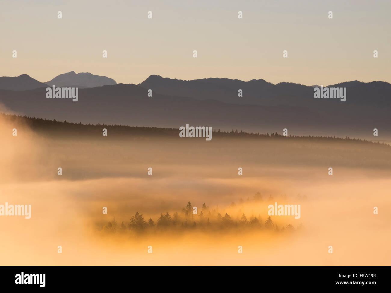 Germany, Bavaria, Upper Bavaria, Isarauen, Pupplinger Au and fog at sunrise - Stock Image