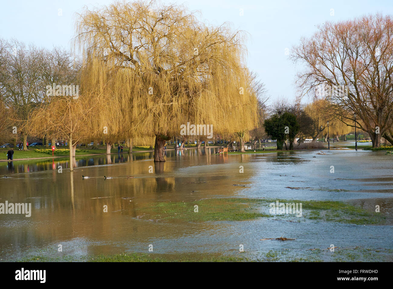 Floodwater flowing over the banks of the River Great Ouse Embankment, Bedford, Bedfordshire, United Kingdom. Stock Photo