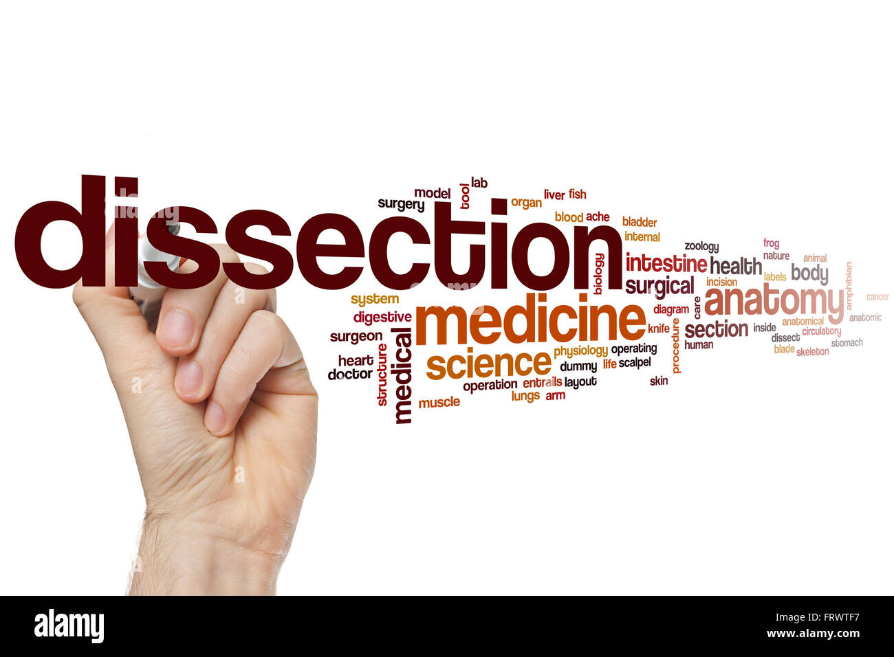 Human Heart Dissection Stock Photos & Human Heart Dissection Stock ...