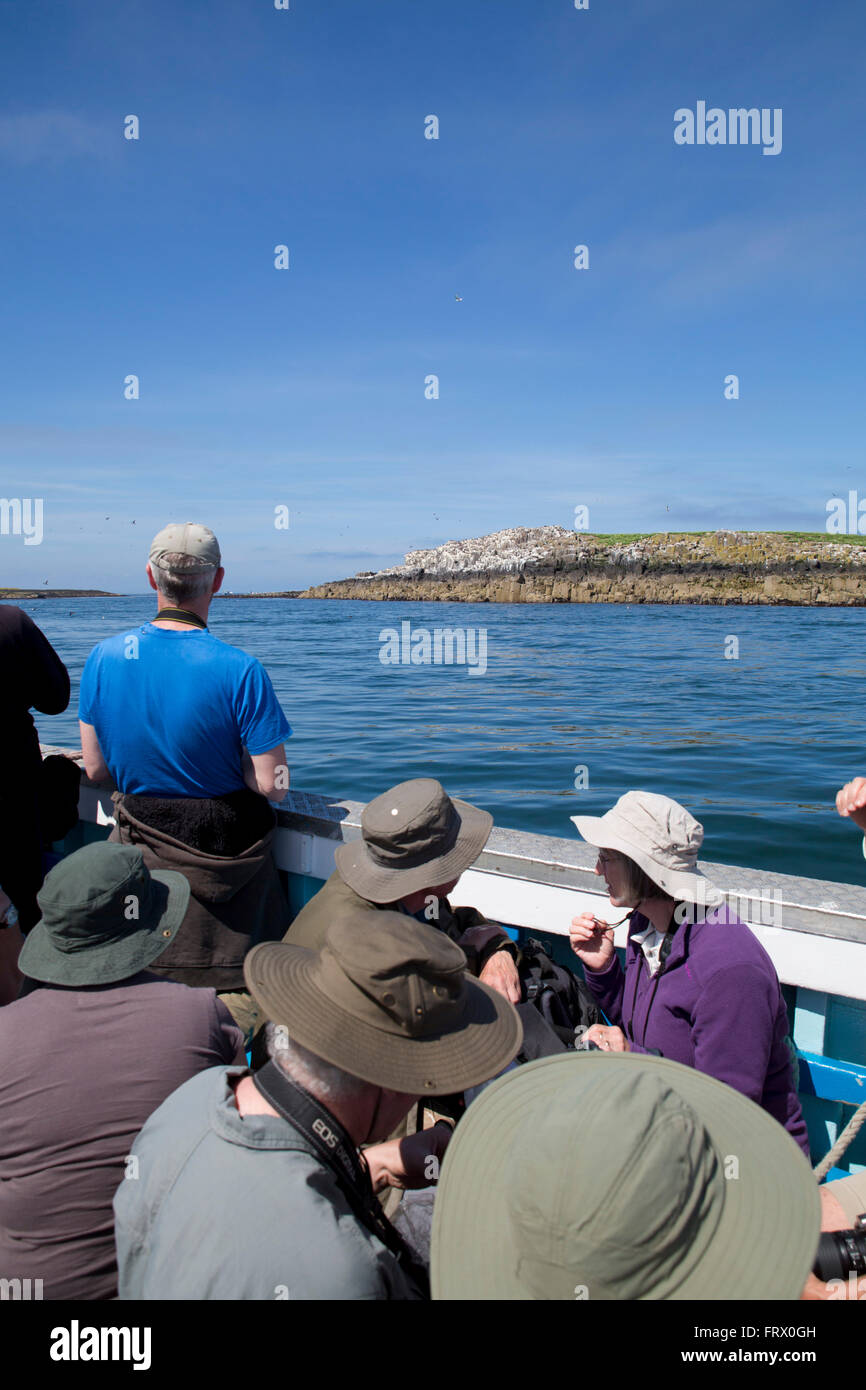 Inner Farne Boat Trip Farne Islands; UK - Stock Image