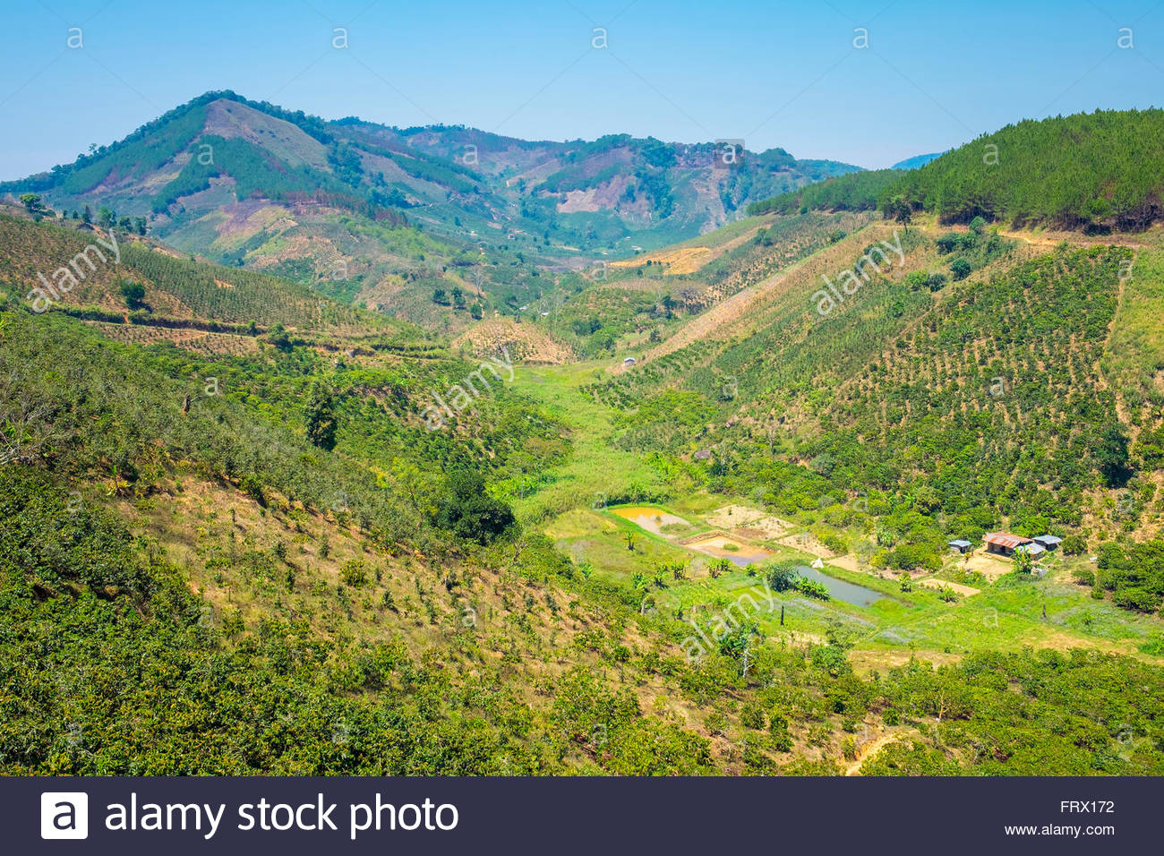 Coffee plantations in Central Highlands, Lam Ha District, Lam Dong Province, Vietnam Stock Photo