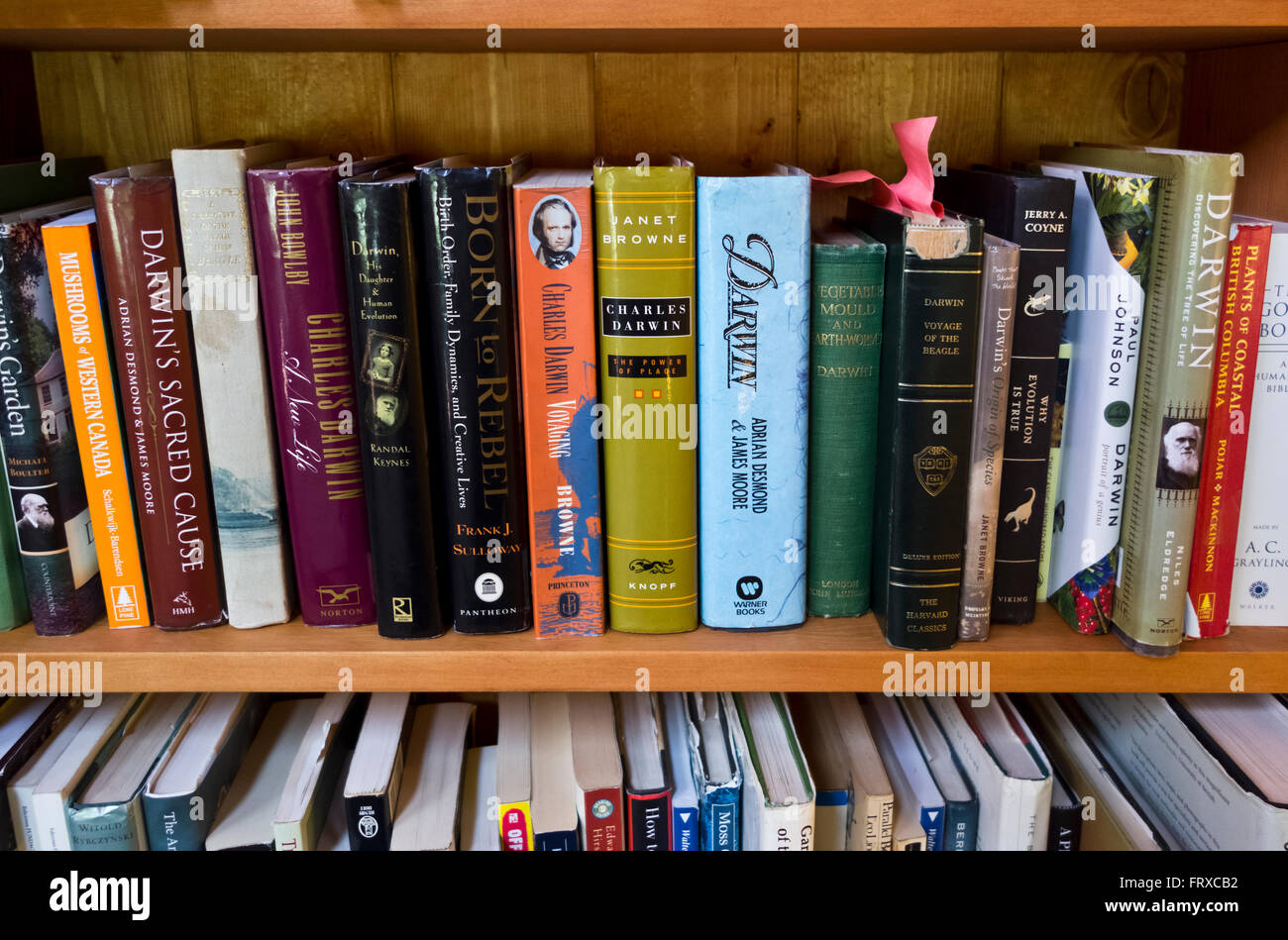 Bookshelf with books about and by Charles Darwin and his theory of evolution. - Stock Image