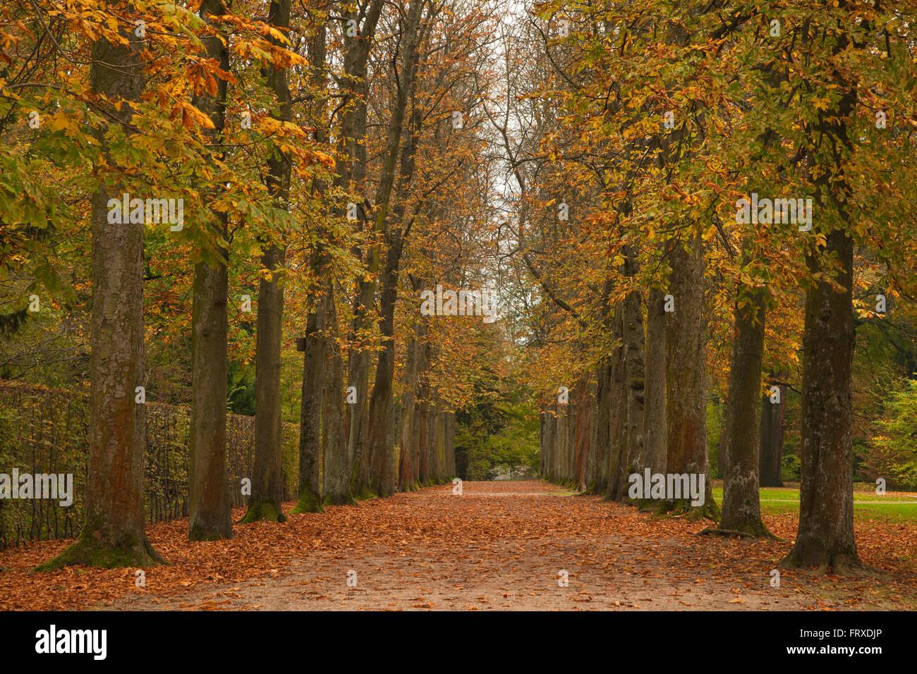 Chestnut alley, Schwetzingen palace gardens, Schwetzingen, Baden-Wuerttemberg, Germany - Stock Image