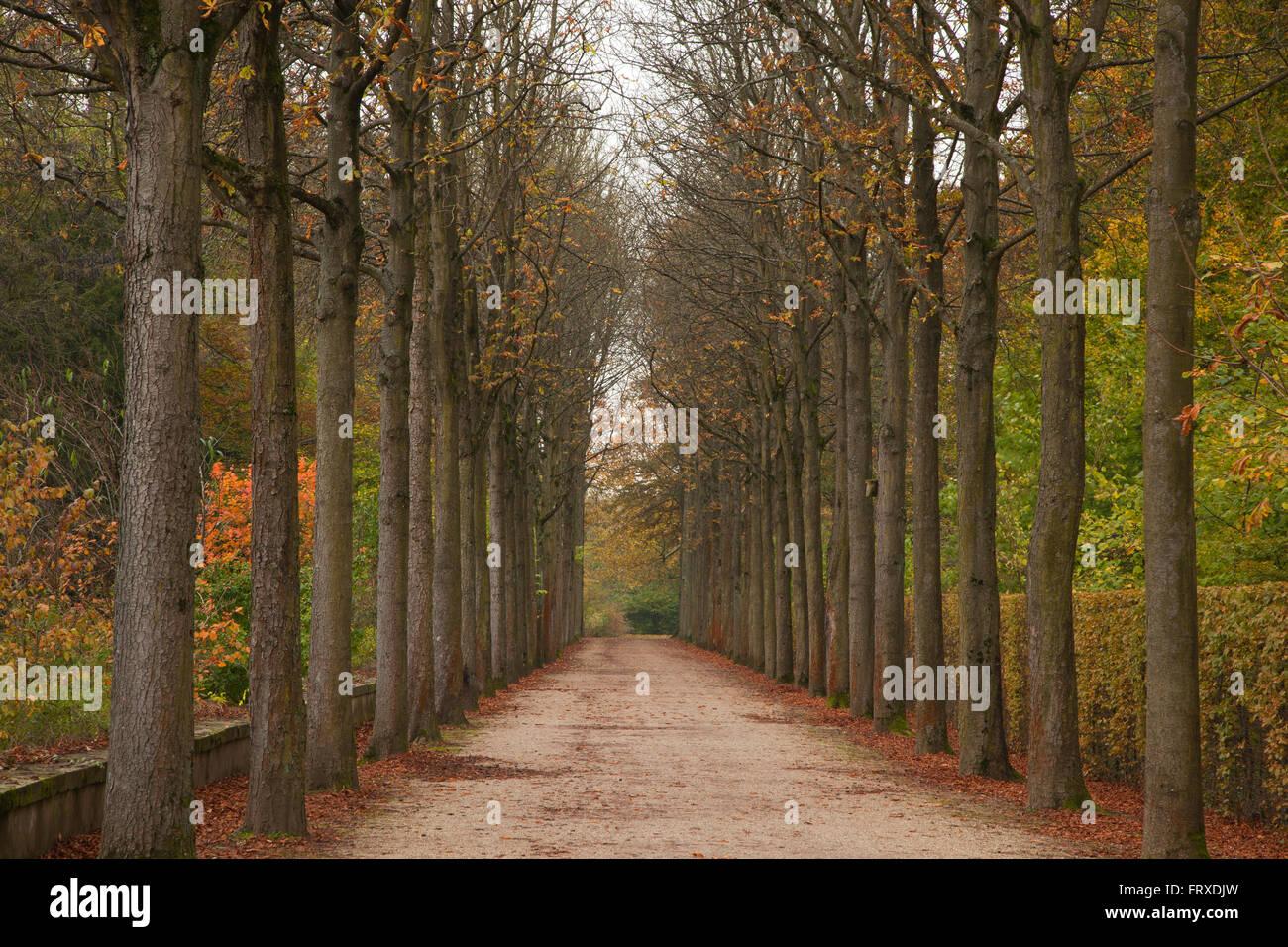 Chestnut alley in Schwetzingen palace garden, Schwetzingen, Baden-Wuerttemberg, Germany - Stock Image