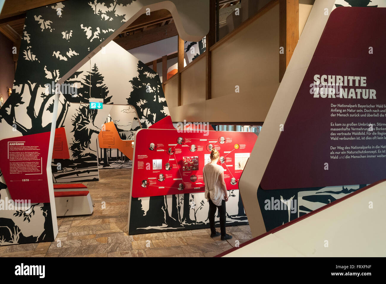 Exhibition in the national park centre Lusen, national park, Bavarian Forest, Bavaria, Germany Stock Photo