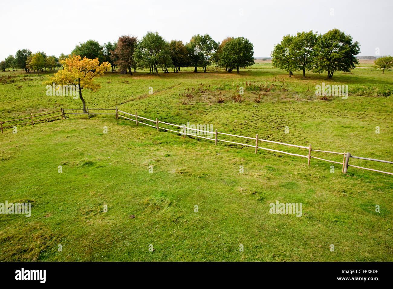 Pasture landscape, Biebrza National Park, Podlaskie Voivodeship, Poland - Stock Image