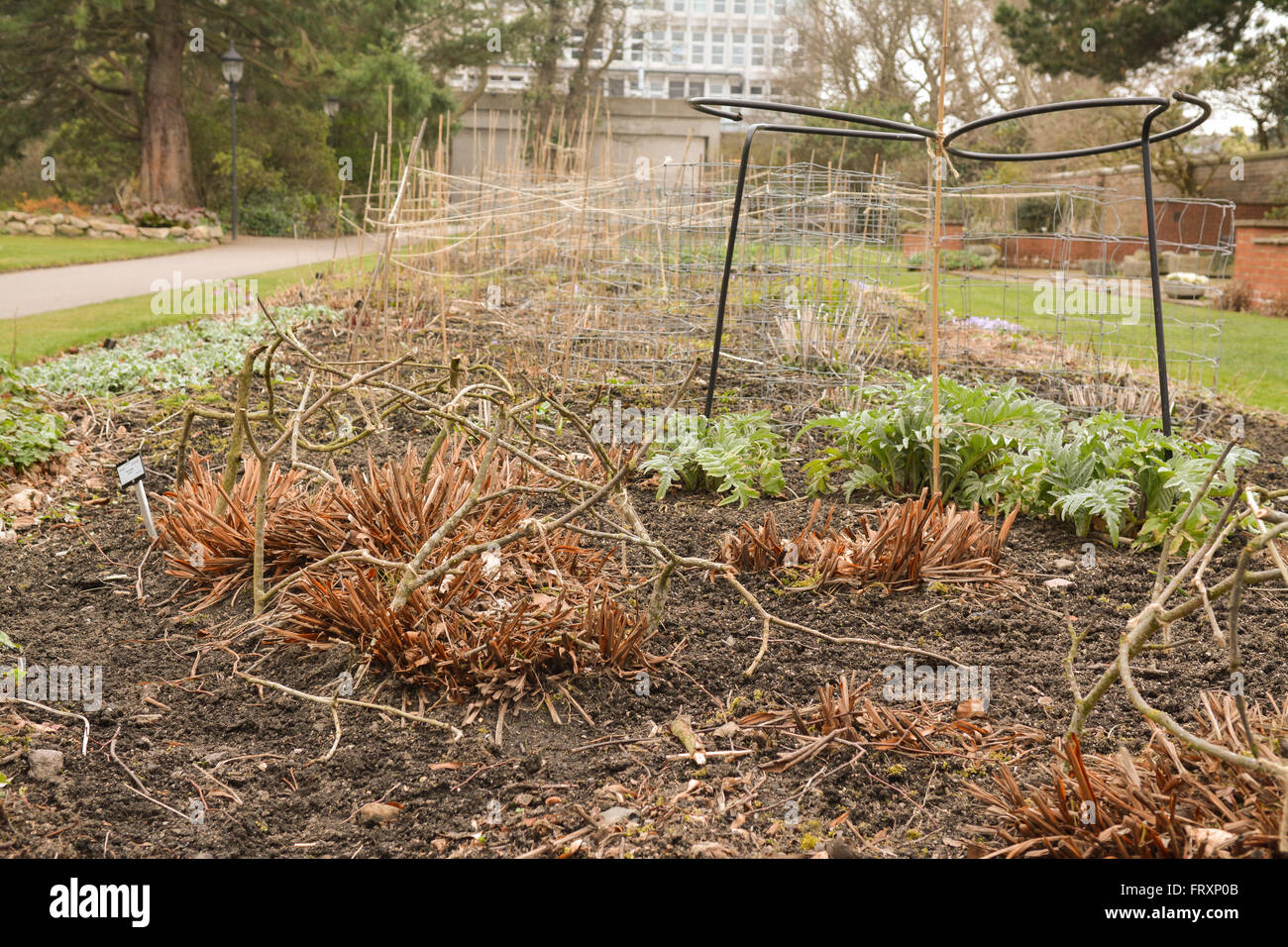 Plant supports in perennial flower bed, Cruickshank Botanic Garden, Aberdeen University, Old Aberdeen, Aberdeen, - Stock Image