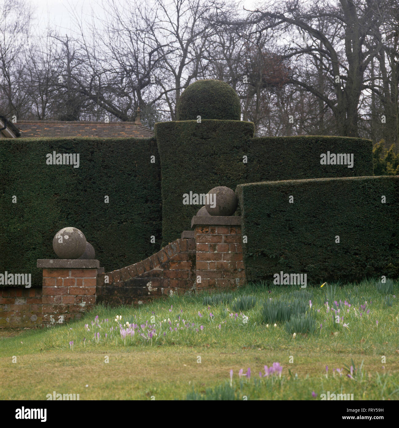 Stone balls on low brick wall in front of a clipped topiary hedge in stone balls on low brick wall in front of a clipped topiary hedge in a large country garden with crocus growing in grass workwithnaturefo