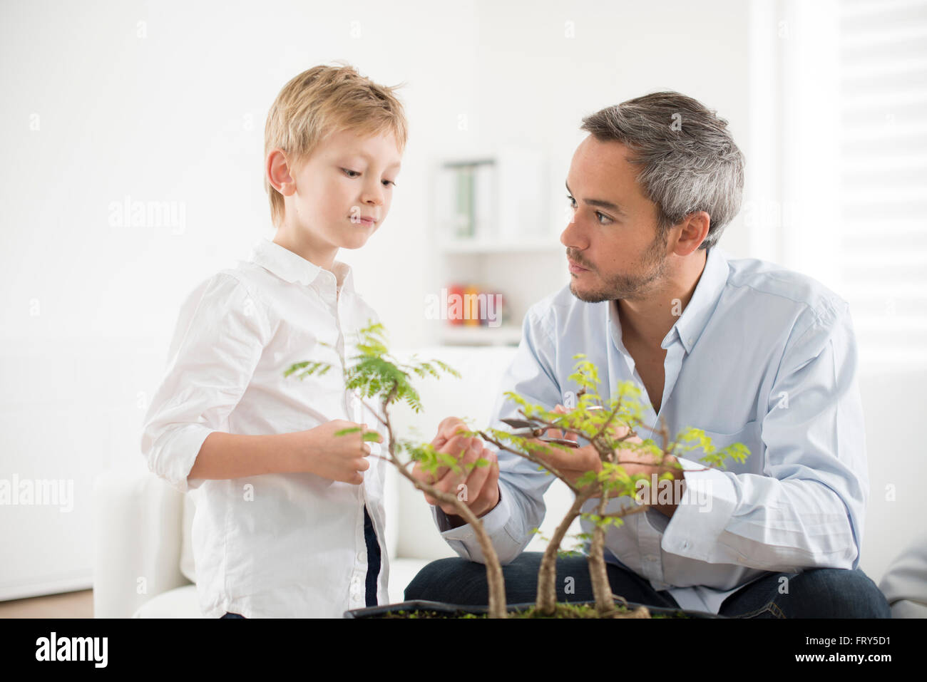 father teaching his son to take care of a bonsai - Stock Image