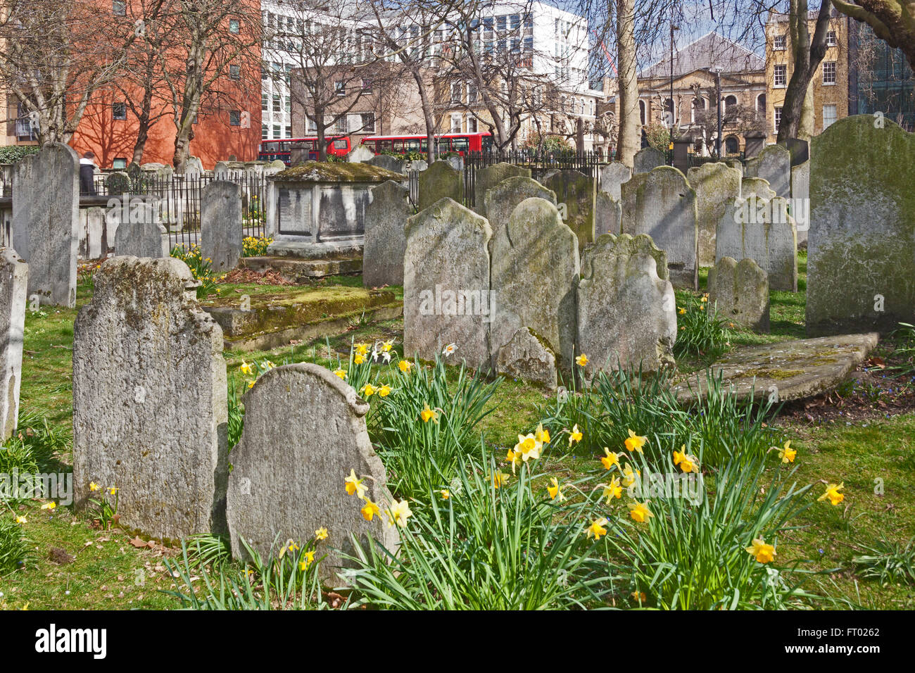 London, Islington   Spring flowers in Bunhill Fields burial ground off the busy City Road - Stock Image