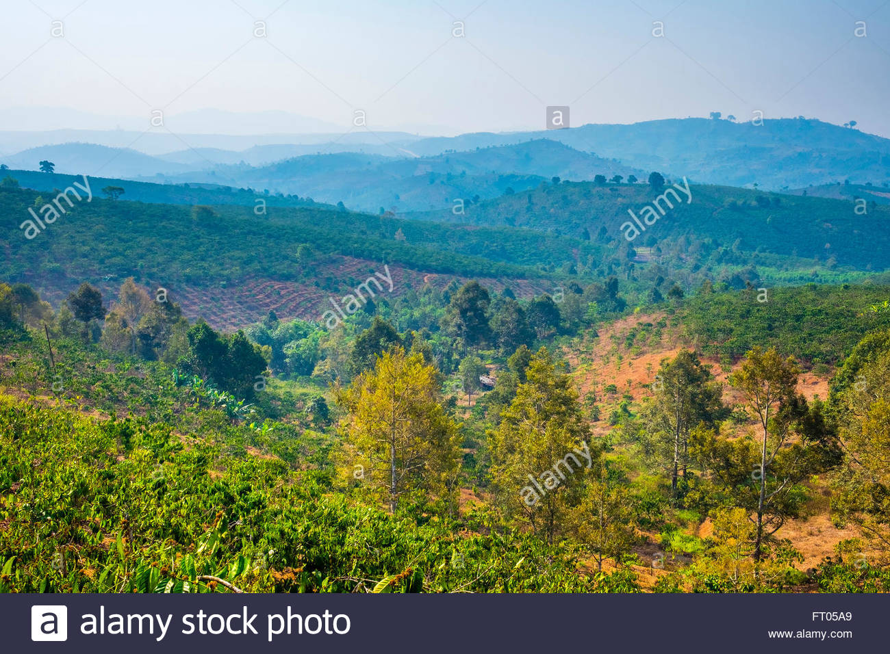 Rolling hills and coffee plantations in Central Highlands, Bao Loc, Lam Dong Province, Vietnam - Stock Image