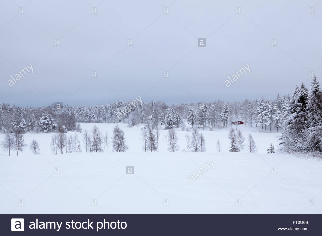 Countryside at Finnish Lapland - Stock Image