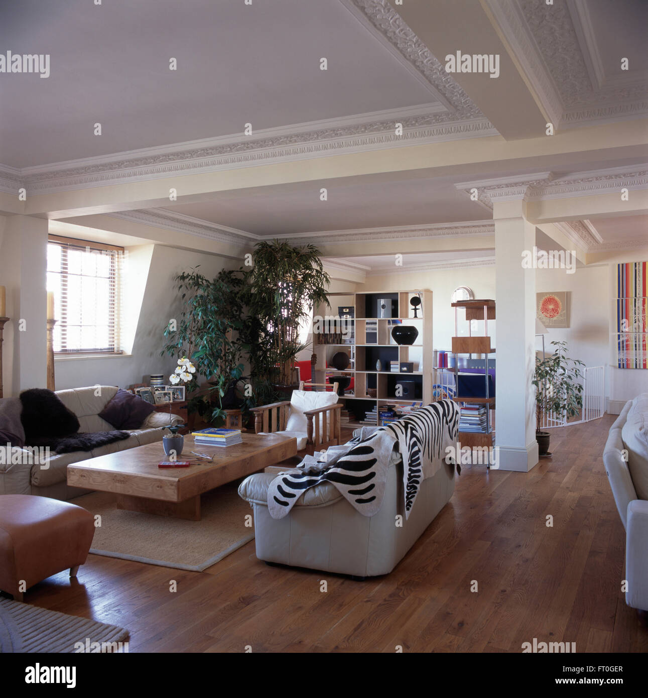 Faux zebra skin rug on white sofa in living area of a nineties loft conversion apartment with wooden flooring - Stock Image