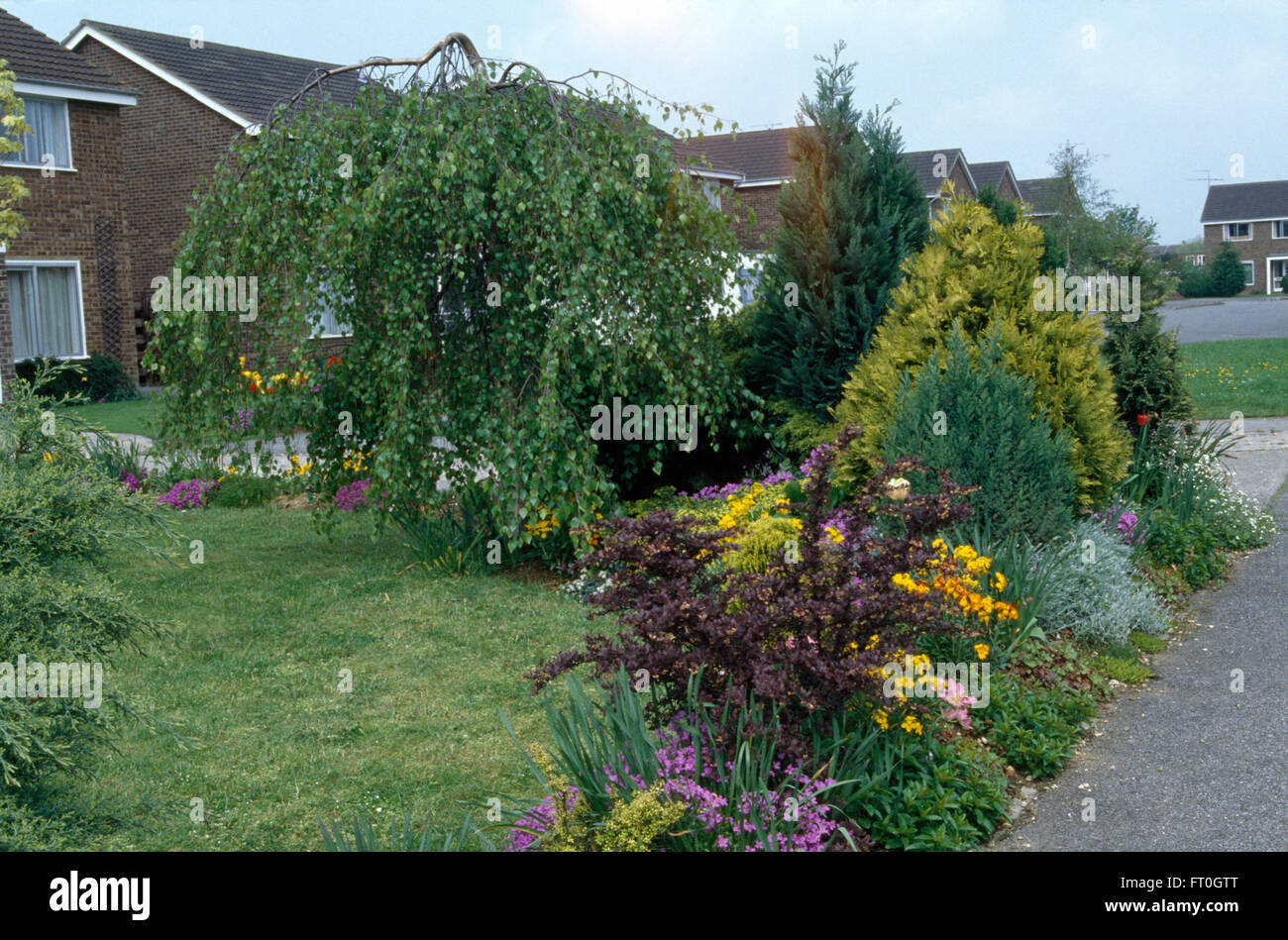 Small shrubs and colorful perennials in border beside lawn and stock small shrubs and colorful perennials in border beside lawn and weeping birch in front garden of a seventies house mightylinksfo Image collections