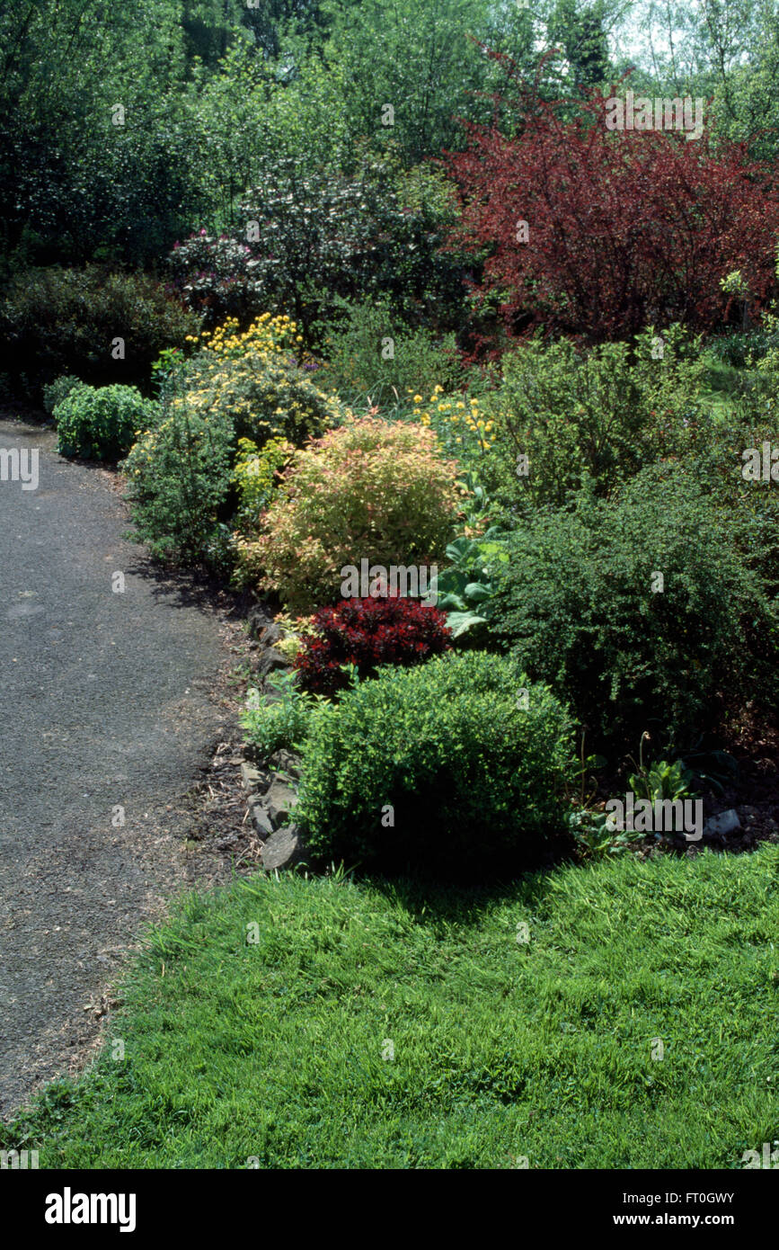 Low growing conifers and a variety of shrubs in a shrub border in a country garden - Stock Image