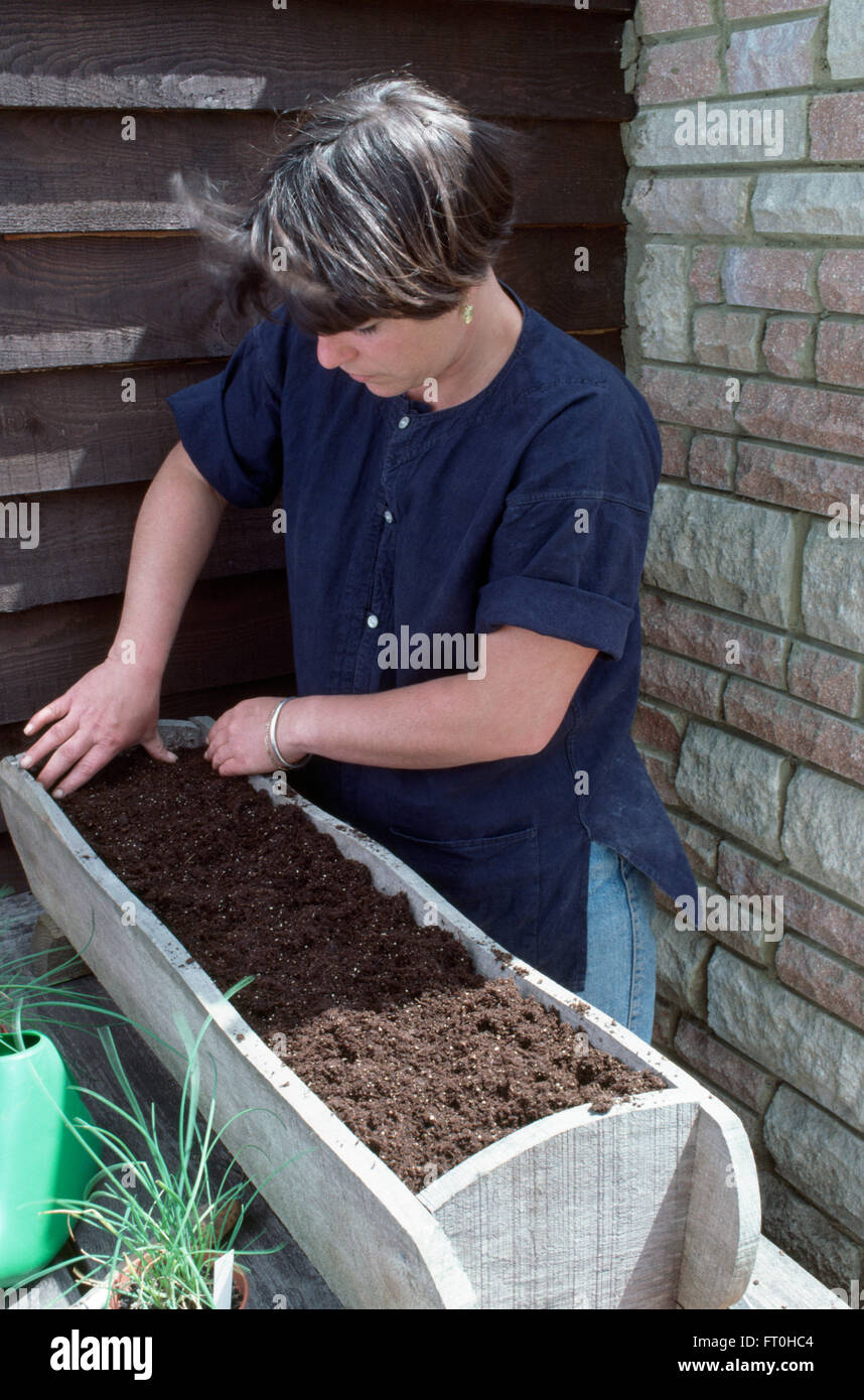 Woman putting compost into a wooden window box before planting up with lettuces     FOR EDITORIAL USE ONLY - Stock Image