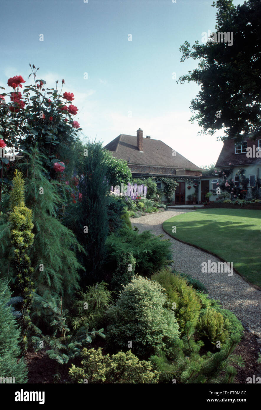 Conifers and low growing shrubs in border beside path in garden of suburban bungalow - Stock Image