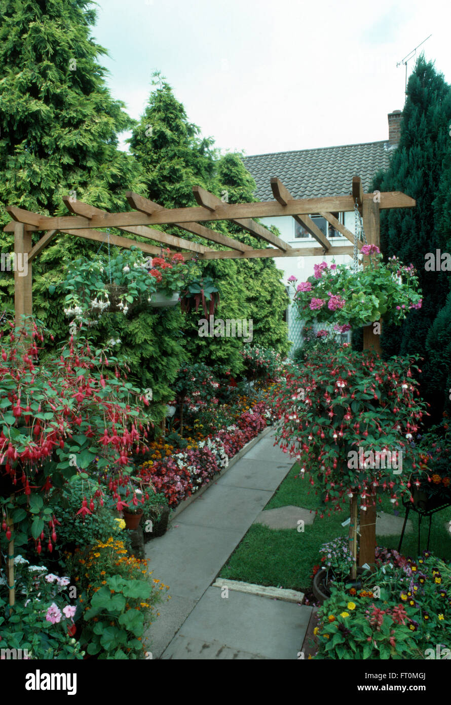 Standard fuchsias in borders beside paved path in a seventies suburban garden with conifers and a wooden pergola - Stock Image