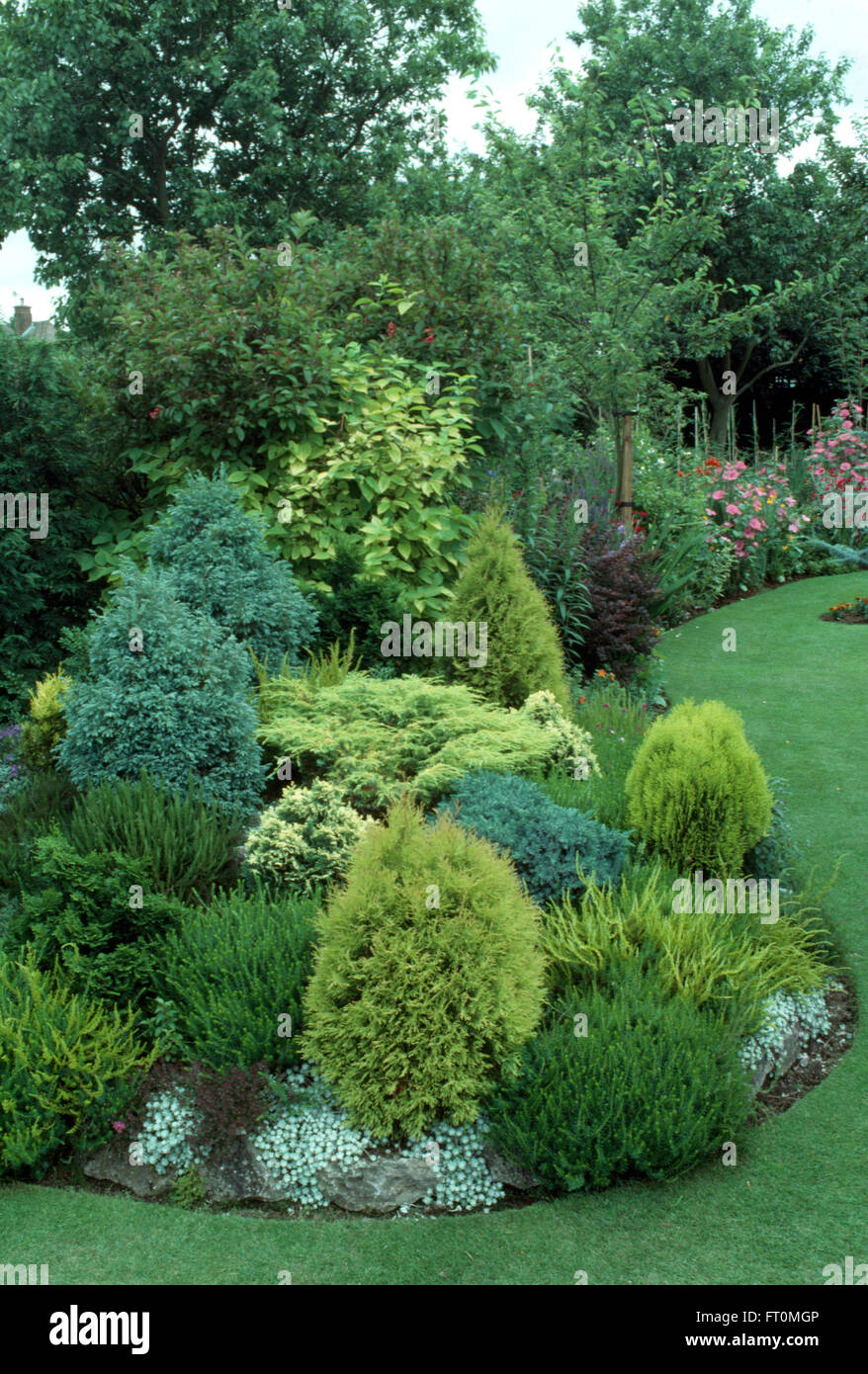 Low growing conifers in a well stocked border in a suburban garden in summer - Stock Image