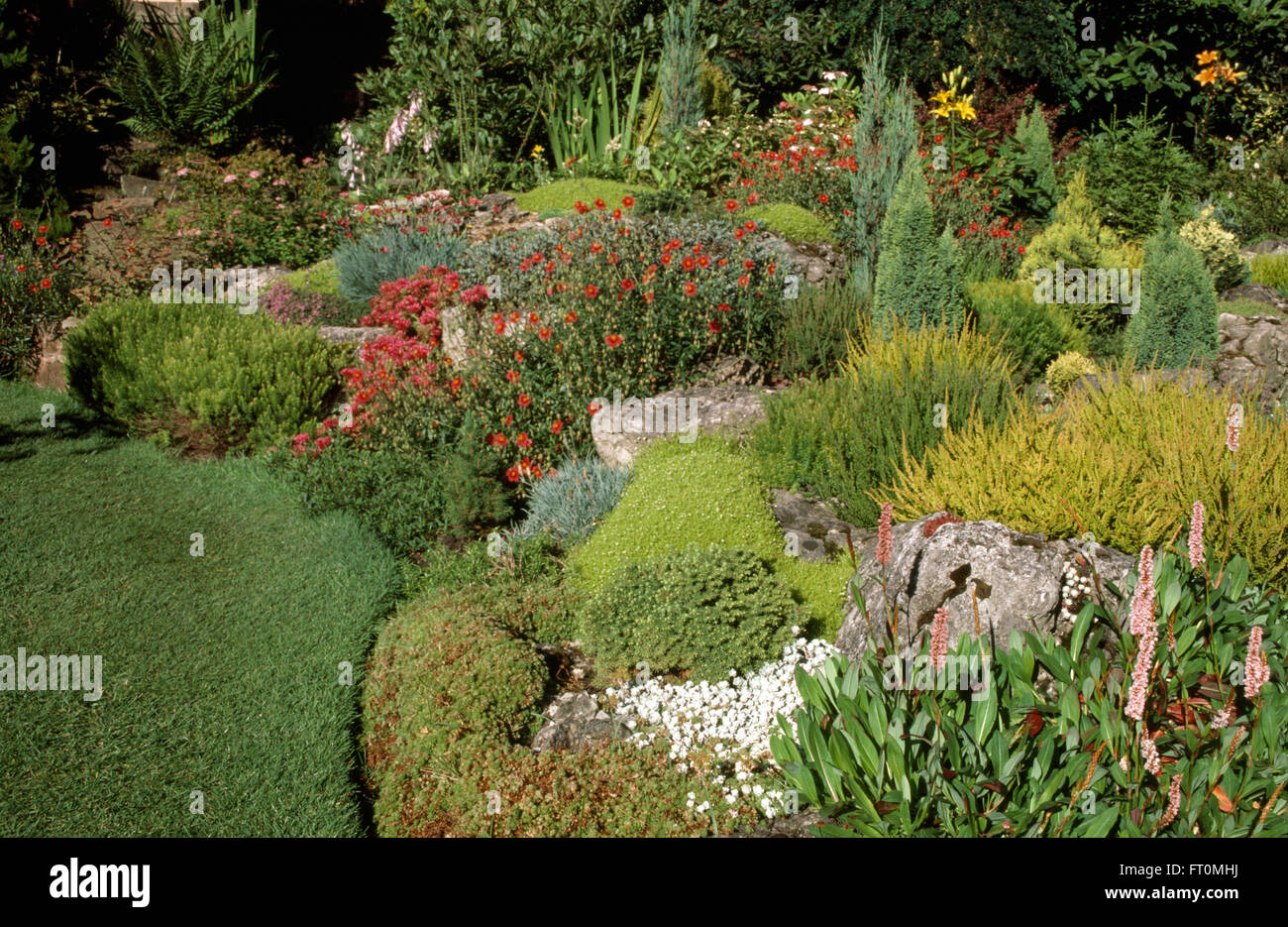 Small conifers and red helianthemums in a well stocked seventies rockery garden - Stock Image