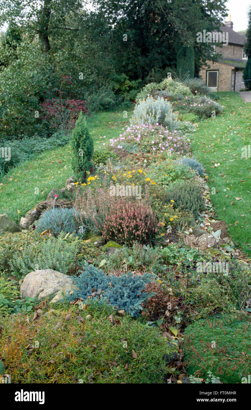 Low growing conifers and heather in a well stocked rockery border in a seventies garden - Stock Image