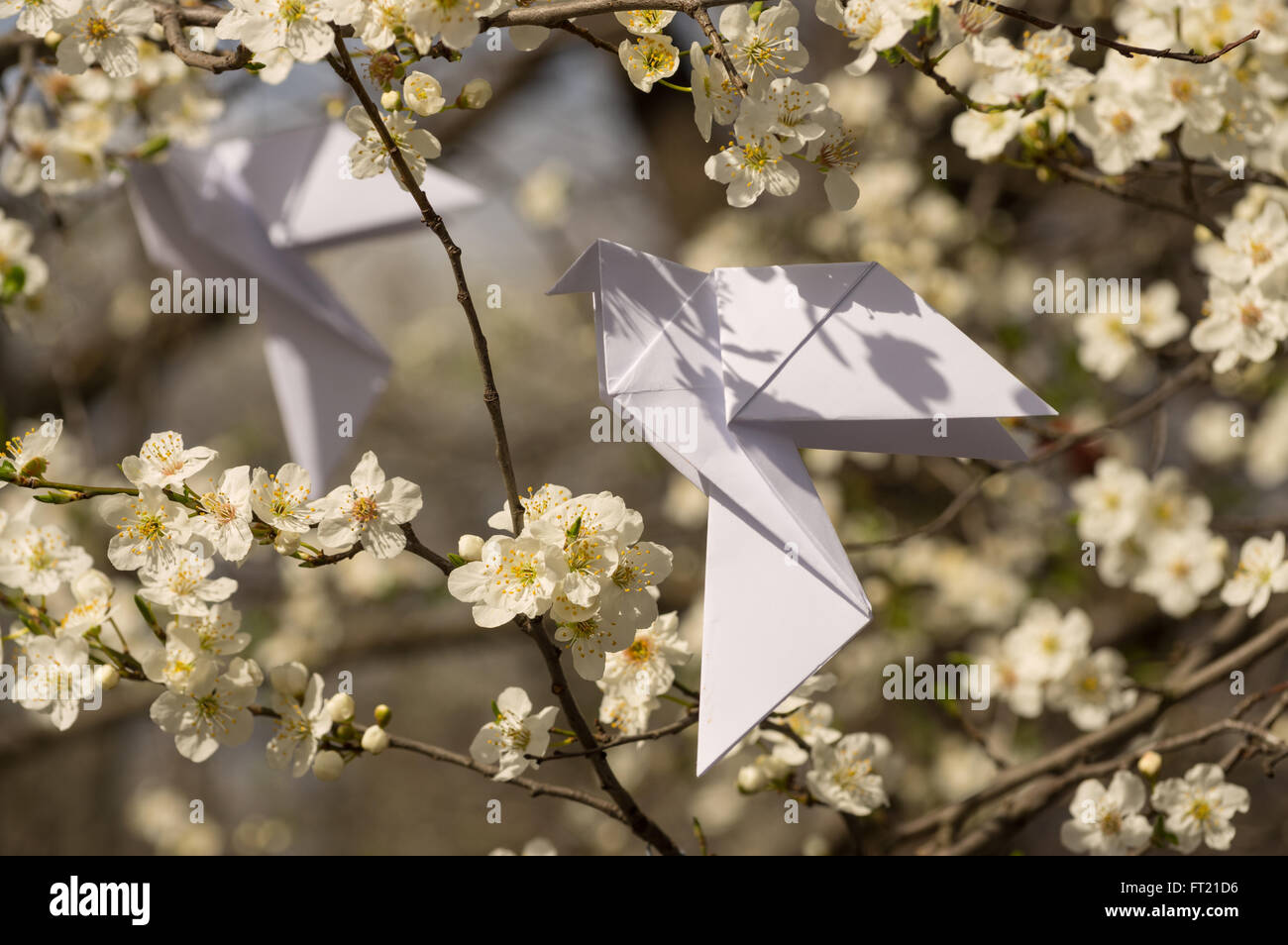 White origami dove birds hanging on blooming spring plum tree - Stock Image