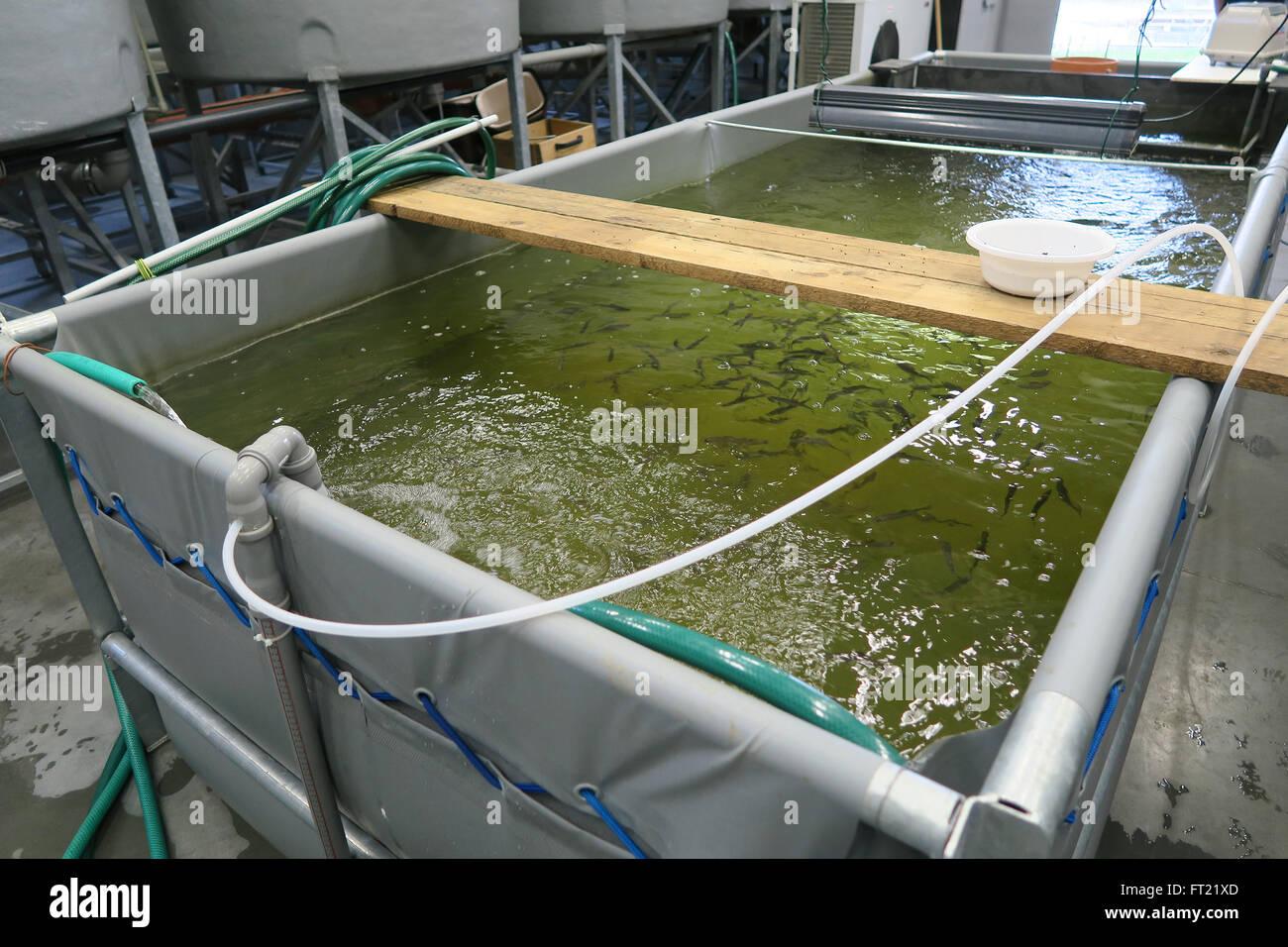 Indoor aquaculture tanks Stock Photo: 100849013 - Alamy