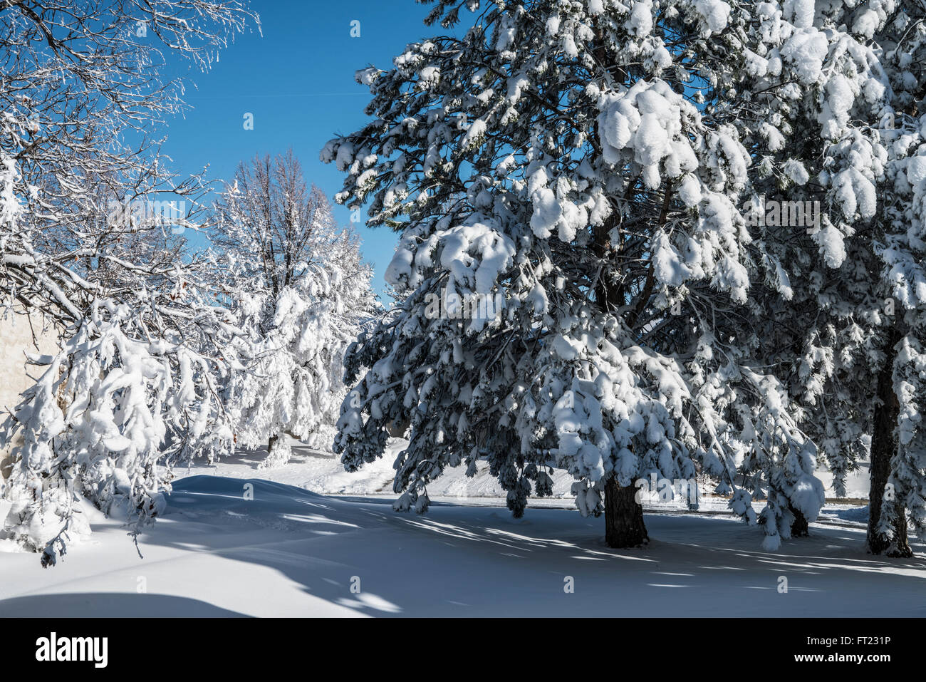 Morning after heavy snowstorm showing trees and lawn under heavy snow cover - Stock Image