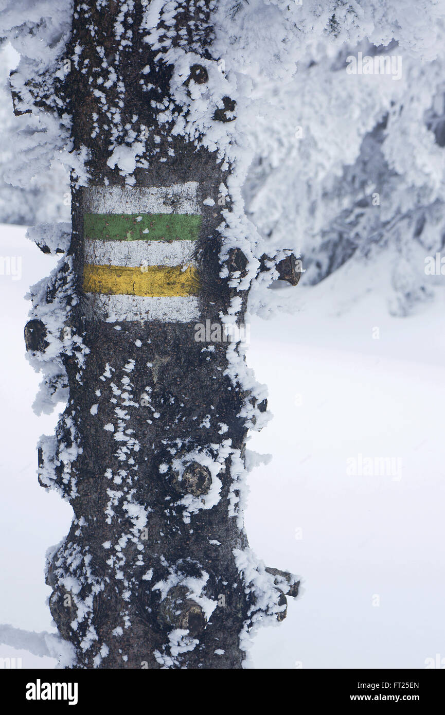 Designation of the tourist trail on a tree in the Jizera Mountains in winter - Stock Image