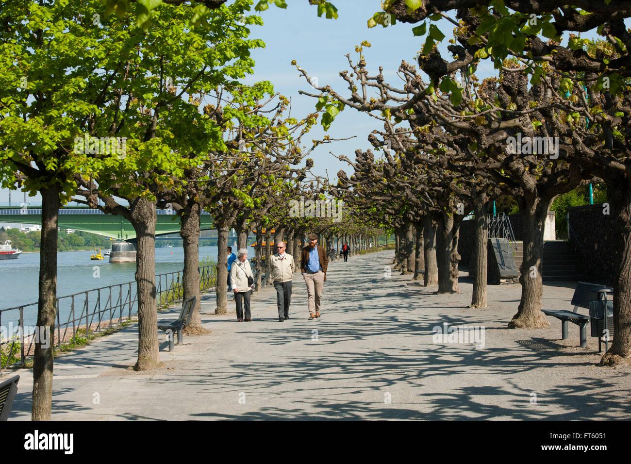 Deutschland, Nordrhein-Westfalen, Bonn, Bonn-Beuel, Rheinpromenade - Stock Image