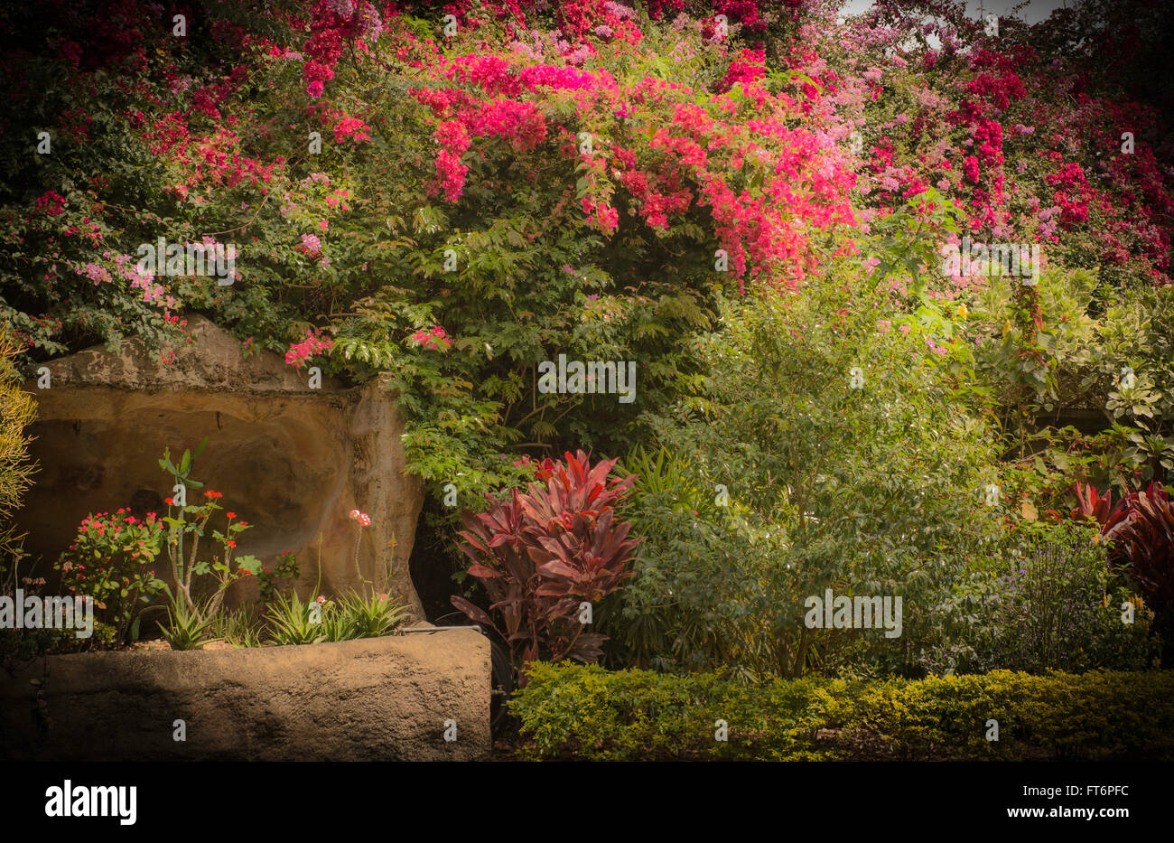 Florida Botanical Gardens Stock Photos & Florida Botanical Gardens ...