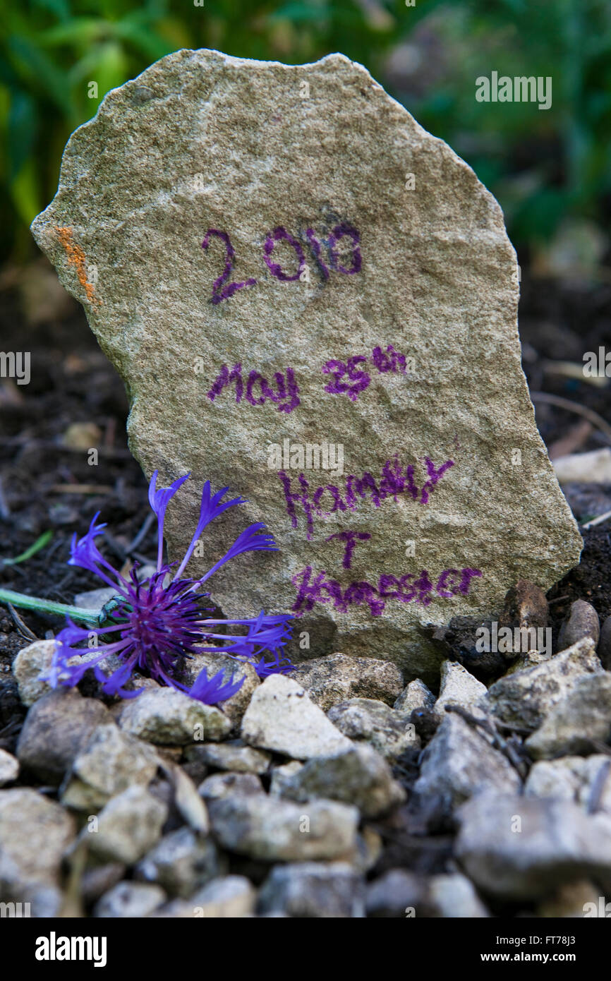 Grave stone of Hammy Hamster - died and buried May 23rd 2010. Joe has written, 2010 May 25th Hammy T Hamster. - Stock Image