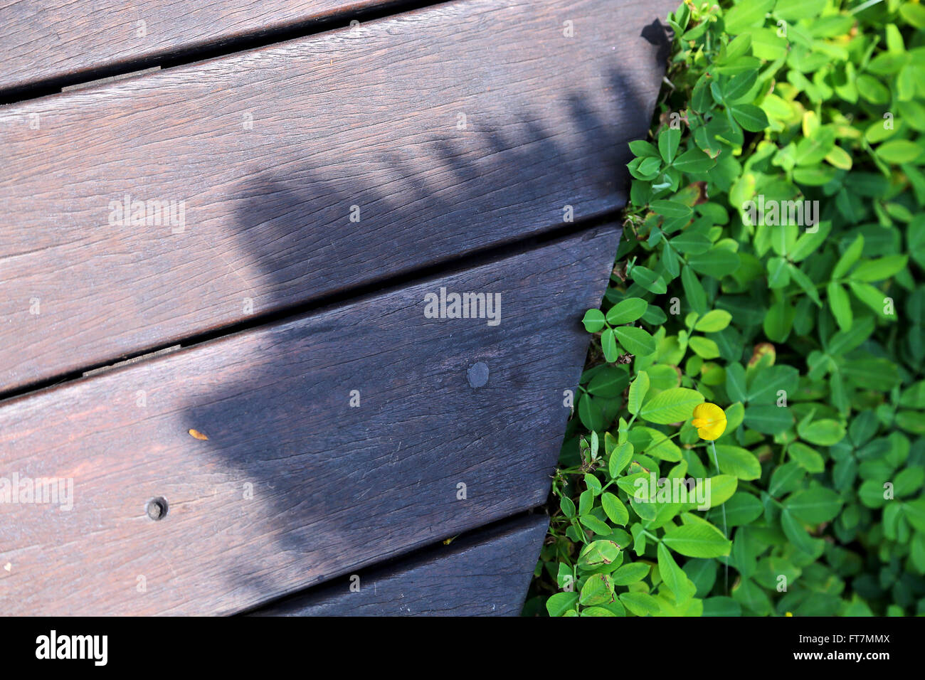composition in photography - Stock Image