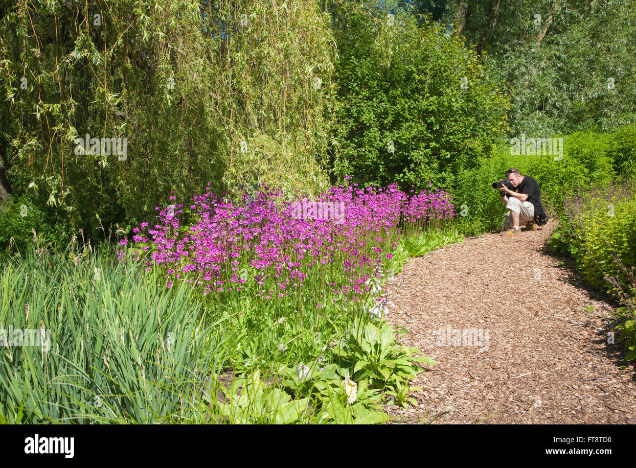Edinburgh, City of Edinburgh, Scotland. Man photographing colourful blooms in the Royal Botanic Garden. - Stock Image
