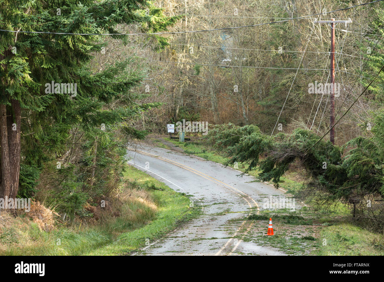 Fallen trees and downed power lines blocking a road; hazards after a natural disaster wind storm - Stock Image