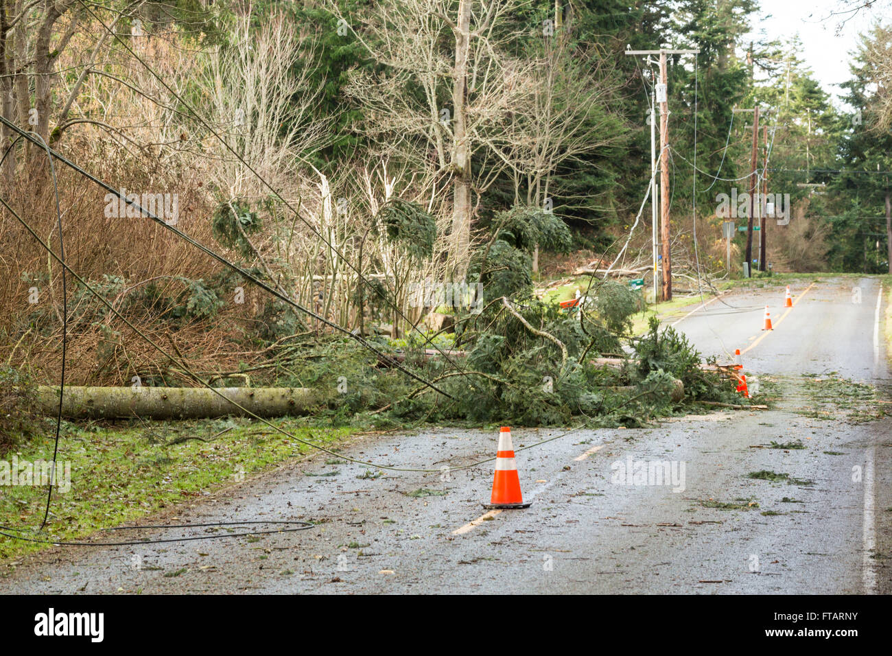 Fallen trees and downed electrical power lines blocking a road; hazards after a natural disaster wind storm - Stock Image