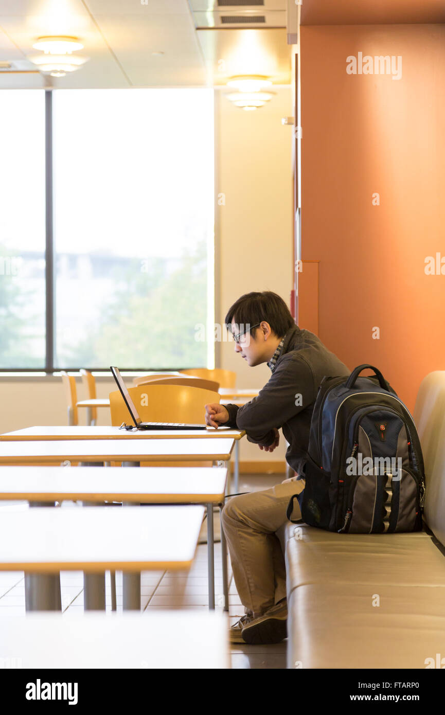An Asian male college student at the American University of Washington studying using laptop computer, Washington, - Stock Image