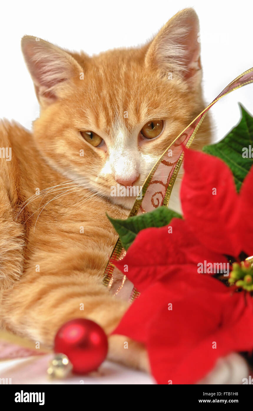 christmas decorations and ginger cat on white background stock image