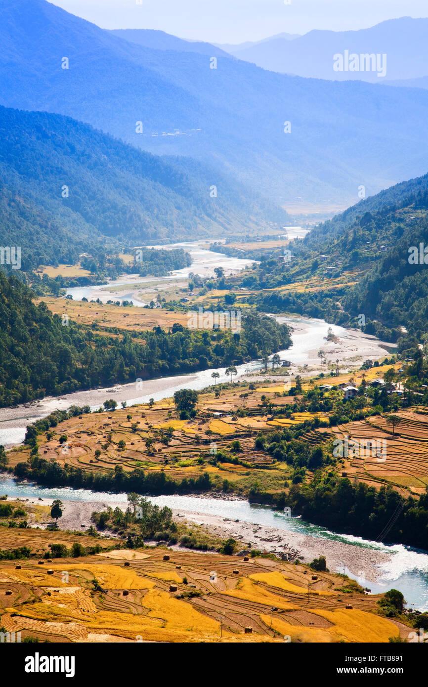 The upper Punakha Valley rice fields along the Mo Chu River.  Bhutan. - Stock Image