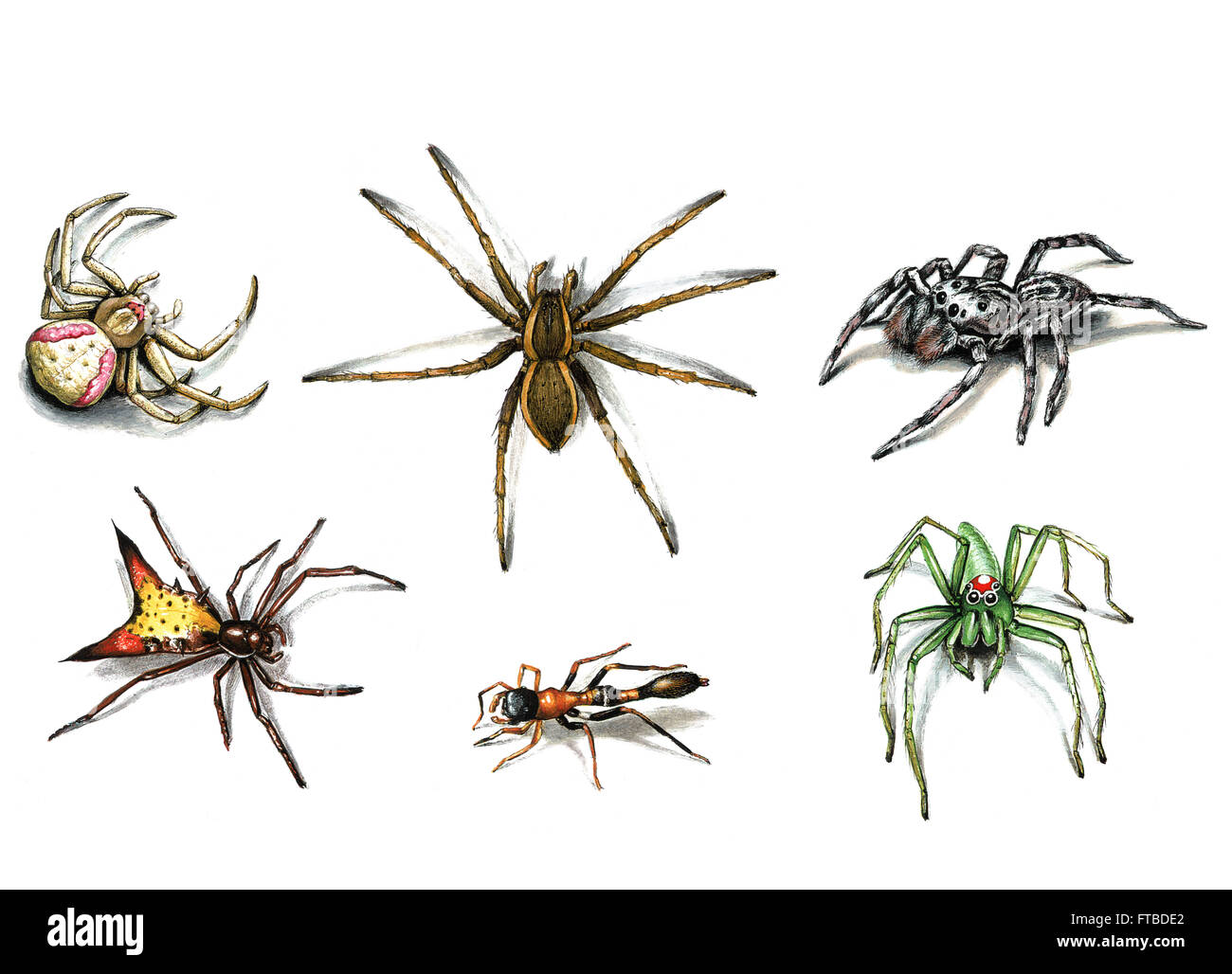 Illustration of arachnids by Bohdan Wroblewski - Stock Image