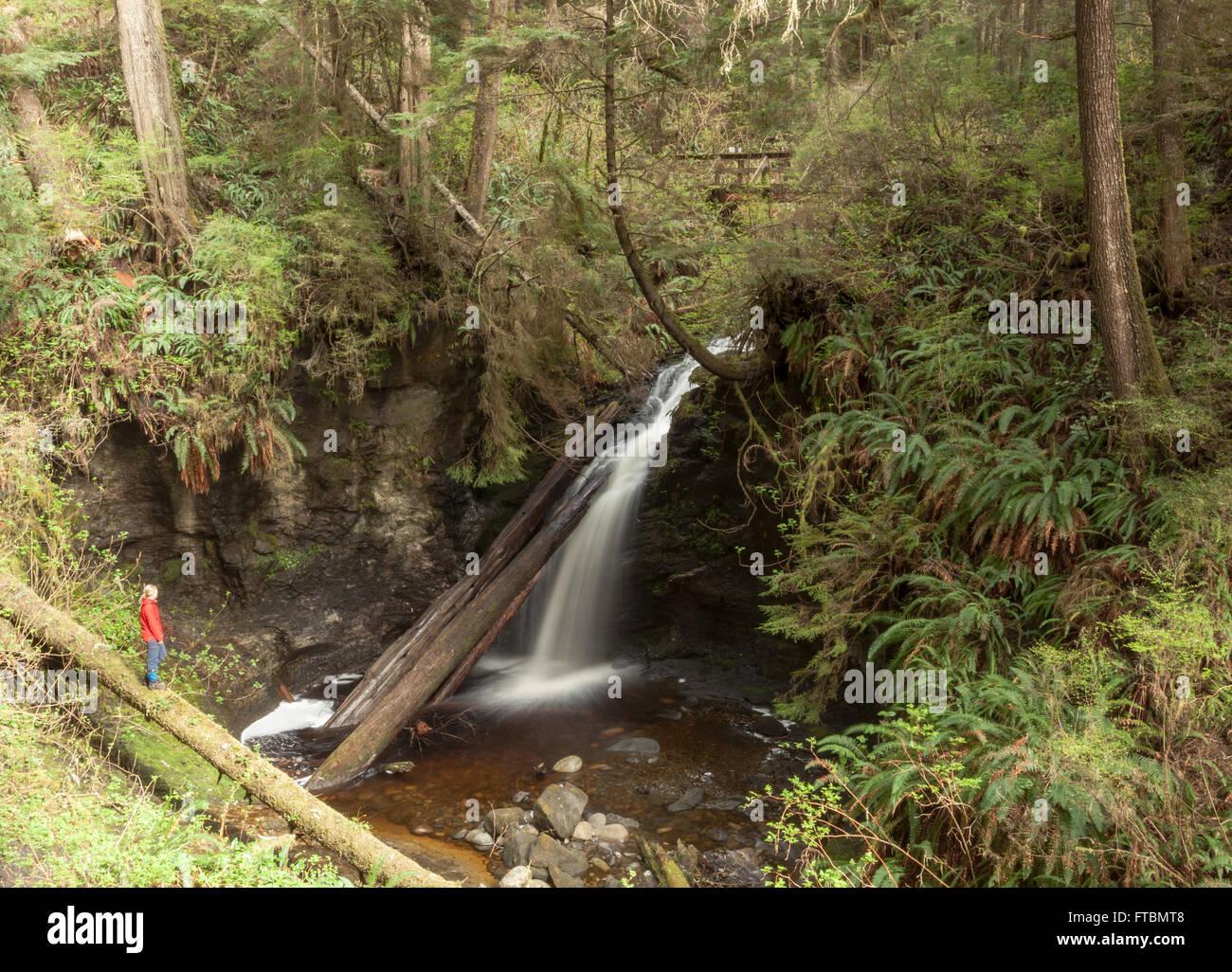 Payzant Creek, as seen along the Juan de Fuca Trail - Stock Image