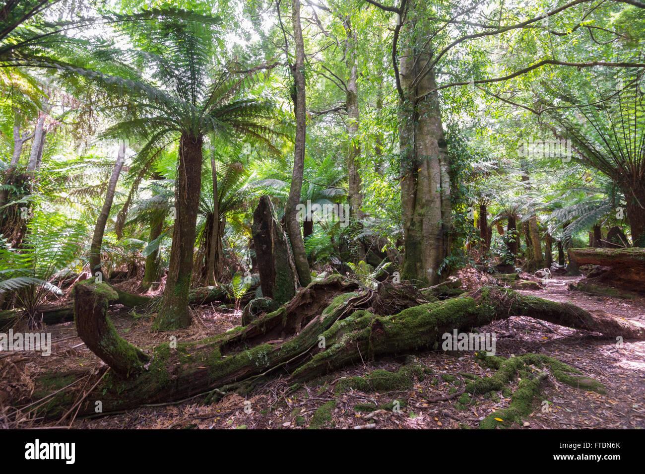 Weldborough Pass, Tasmania, TAS, Australia - Stock Image