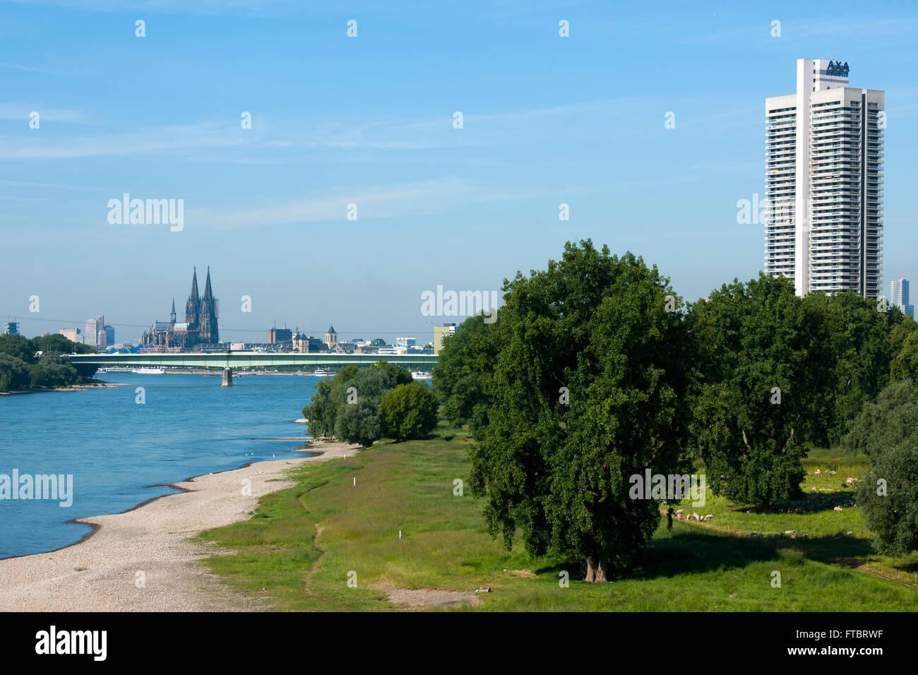 Deutschland, Köln, Blick von der Mühlheimer Brücke auf das linke Rheinufer mit einer Herde Schafe, Blick zum Colonia Stock Photo