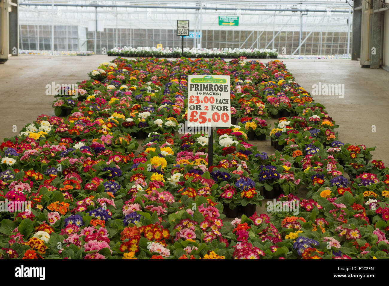 flower nursery,  flower centre, garden center greenhouse - Stock Image