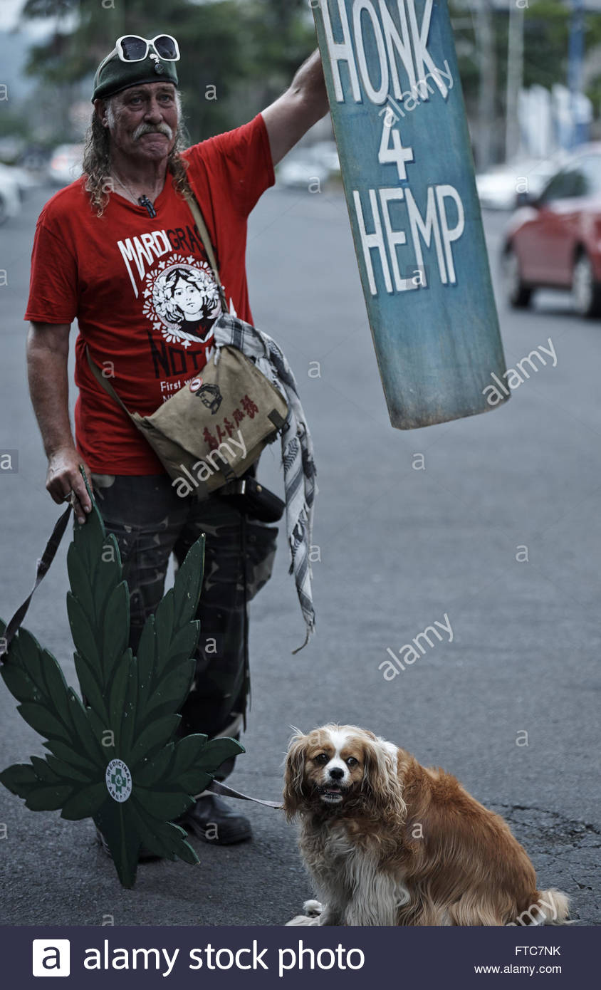 A man holds a hemp leaf prop, and a sign - which states: 'Honk 4 Hemp' - to the passing cars; at a drug - Stock Image