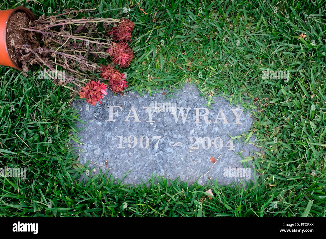 Grave of Fay Wray with dead flowers in Hollywood Forever Cemetery, Los Angeles, California - Stock Image